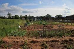 Talgarth Allotment Gardens