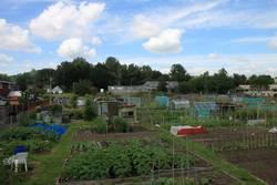 Newmarch Street Allotment Gardens