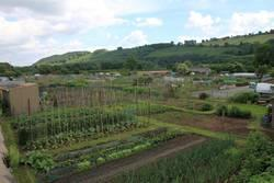 The Watton Allotments