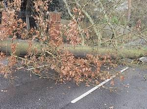 Report a problem with hedges, trees or verges