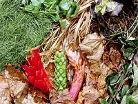 Image of some green waste